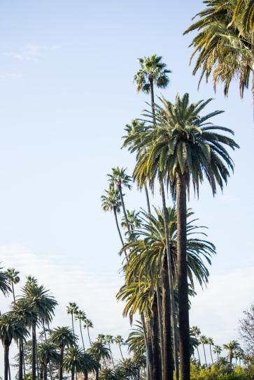 Famous Cali Palms